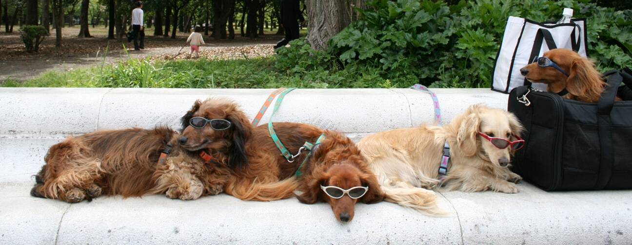 Ruth Bartlett Our Bartlett Photography Dogs Sunglasses Yoygi Tokyo Japan